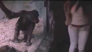Şempanzeye Poposunu Gösteren Kadın