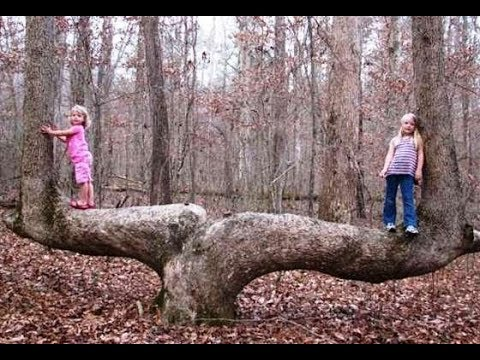 These Trees Can Be Found All Over The Woods… But You'll NEVER Believe How They Got There