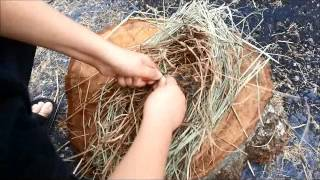 Birds Nest Making For Ferro Rod Ignition