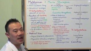 Meldonium and Maria Sharapova explained by a Medical Student