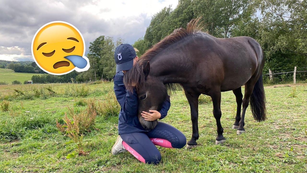 Abschied von Smarty ❤️😪   Marina und die Ponys