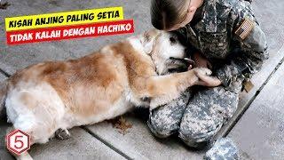 Kisah Sedih Tentang Anjing Yang Setia Menunggu Majikannya Sampai Akhir Hayatnya