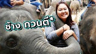 ปางช้างแม่สา พามาเล่นกับช้าง อย่างใกล้ชิด