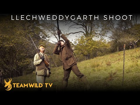 High Pheasant Shooting At Llechweddygarth In Wales With Ian Harford