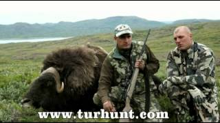 Охота в Гренландии/Hunting in Greenland--OV Grenlandiyada