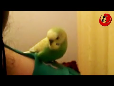 "Gadająca papuga STEFAN – ""Stefan, gadająca papuga"" (STEPHAN The Talking Parrot)"