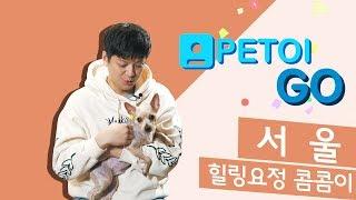 [PETOI] 페토이 GO 콤콤이네 편