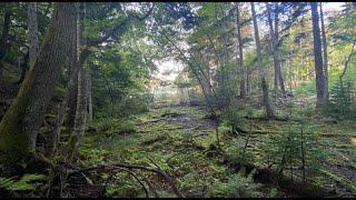 [E子と阿寒摩周国立公園ツアーキャンプ]Vol.2  多和平キャンプ場からオンネトー野営場に  そして・・・