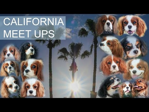 Cavalier King Charles Meet Ups California | Dog Friendly Restaurant & Brewery