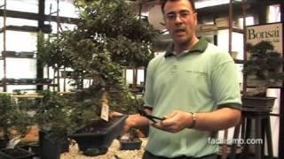 Jardinería fácil: Poda de bonsáis