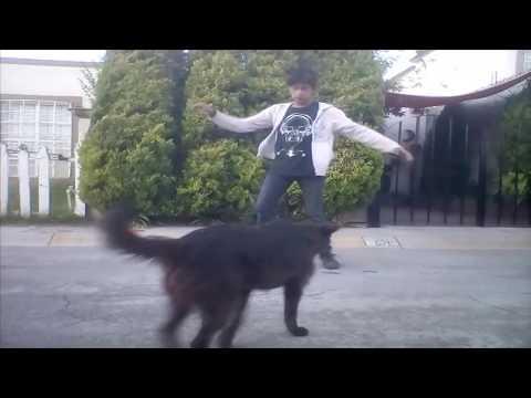 Slushii - Catch Me | Break Beat | Dance