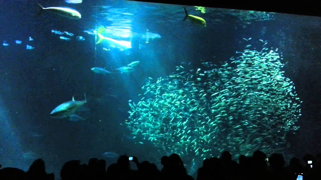 Image gallery monterey bay aquarium fish for Oceanic fish tanks
