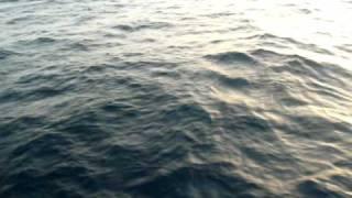 Dauphins des Caraibes par Sailndream