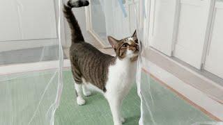 태어나서 처음으로 엄청 큰 모기장 텐트를 본 고양이의 …