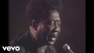 Muddy Waters - Honey Bee (Live) Video