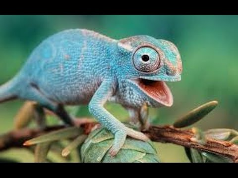 Funny Animals Compilation 2016 | Best Funny Animal Fails and Cute - Try Not To Laugh