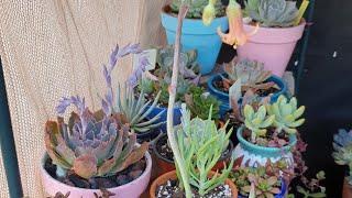 Que Sustrato Uso en Mis Suculentas? #suculentas #jardineria