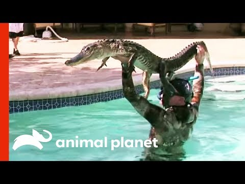 Beware of Green, Scaly Pool Toys | Gator Boys