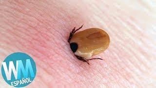 !Top 10 Picaduras de Insecto Mas DOLOROSAS!