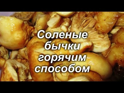 Как готовить грибы бычки