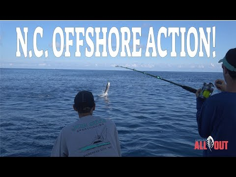 Offshore Sailfish On The