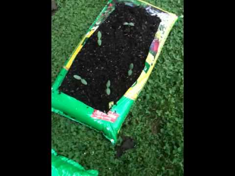 Miracle gro bag garden
