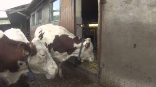 [GoPro] Un soir d'hiver à la ferme !