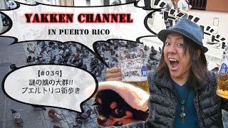 謎の鳩の大群!!プエルトリコ街歩き!!【#039】YAKKEN CHANNEL