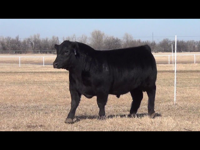 Express Ranches Lot 18