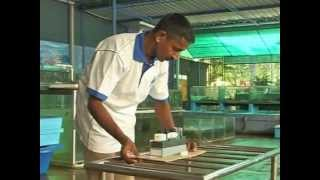 Aquatic Nurseries - From the Deep Blue Waters of Sri Lanka