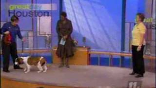 Bark Busters Home Dog Training On Good Day Houston