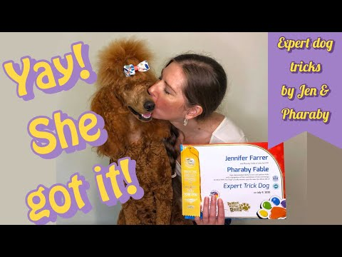 Expert Dog Tricks  Building trust with your dog | Jen & Pharaby #lifewithaservicedog