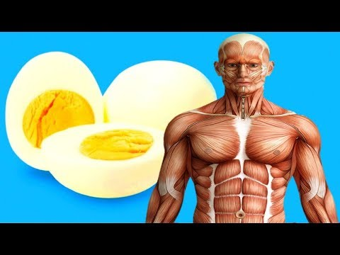 Eating 2 eggs a day
