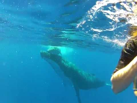 Whale Swim Tonga - Family fly by