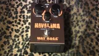 Way Huge Havalina Germanium Fuzz Demo With Kingbee Tele & Dr Z Antidote