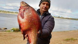ВЗЯЛ ЛЕЩА НА МИЛЛИОН ДОРАБОТАЛ СНАСТИ и ОБМАНУЛ ХИТРОГО КРУПНОГО ЛЕЩА Рыбалка на кольцо