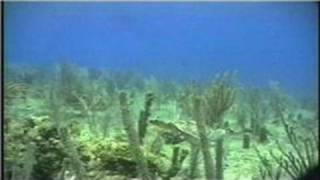 Scuba Diving Lessons : How to Equalize Underwater Ear Pressure in Scuba Diving
