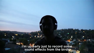 Bird cacophony at 5am, Los Angeles