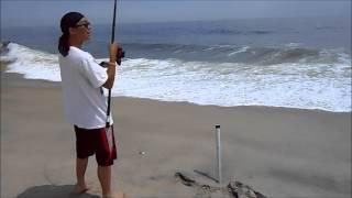 Striped Bass Surf Fishing @ Sandy Hook, NJ. Pugnose Striper and Blackfish 5/16/13