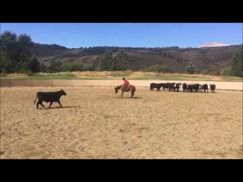 Smart Ginnin Cat 2013 WR This Cats Smart Gelding in training with TJ Good