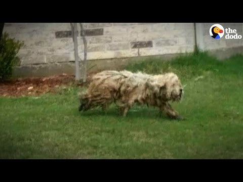 Stray Dog Gets The Best Haircut