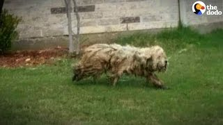 Stray Dog Gets The Best Haircut | The Dodo