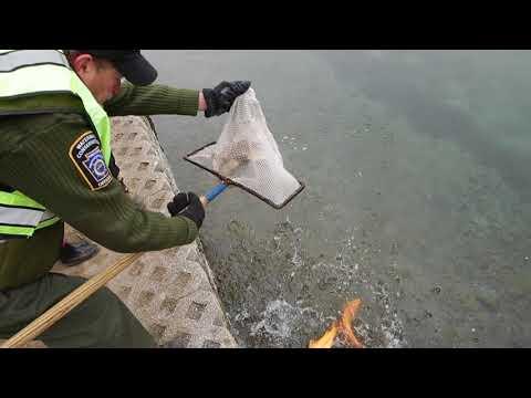 Trout Stocking: Pennsylvania Trout Fishing Season 2018