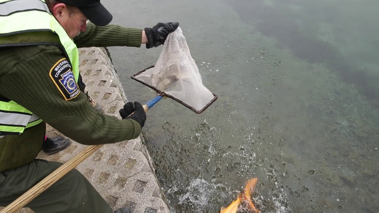 Trout season opening day Saturday, March 31: Here's what you