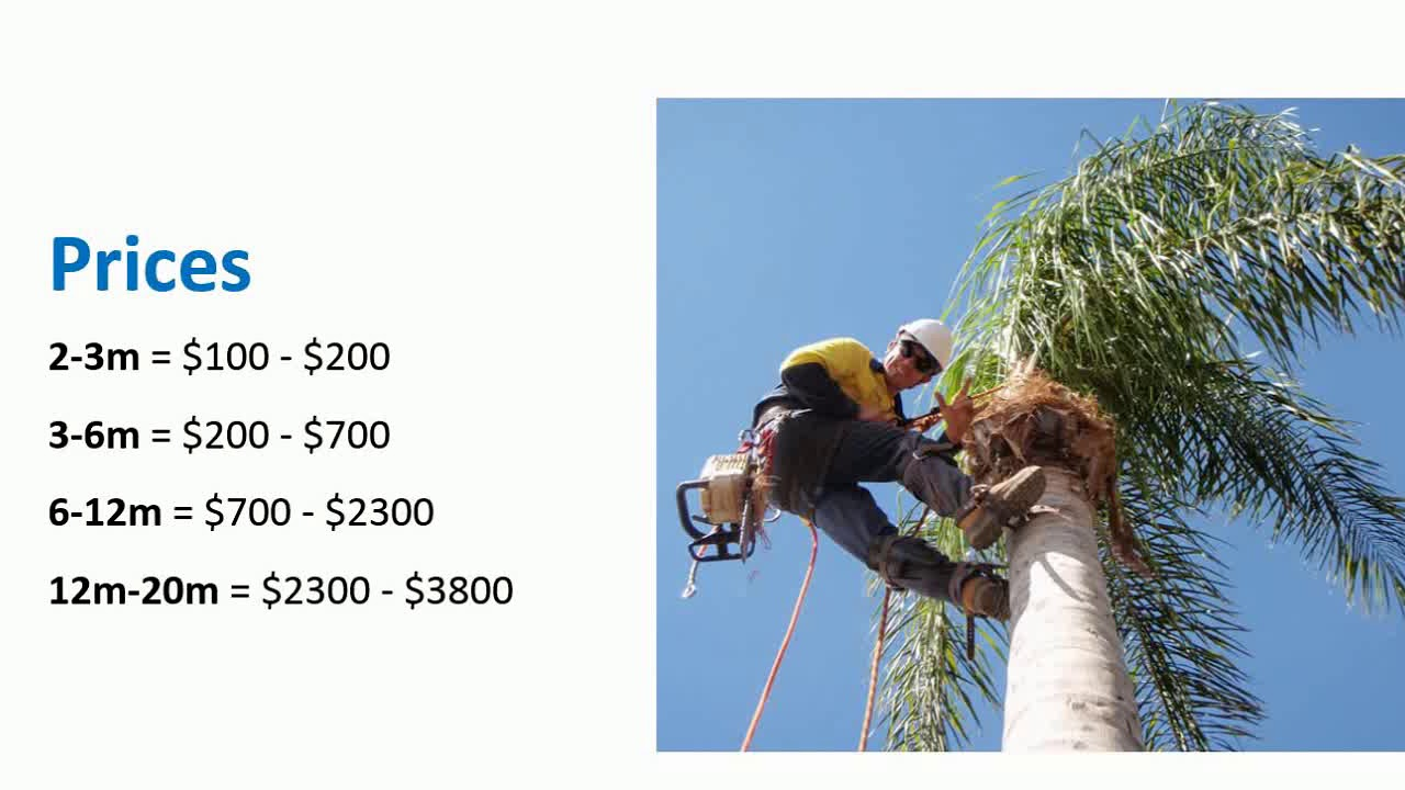 How much does it cost to cut down a tree? - YouTube