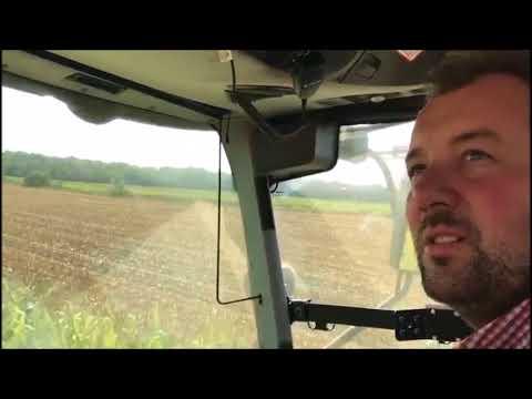 De maïs in Canada gaat er af