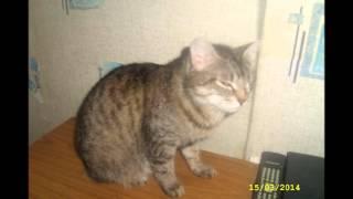 Домашний приют кошки г Курган