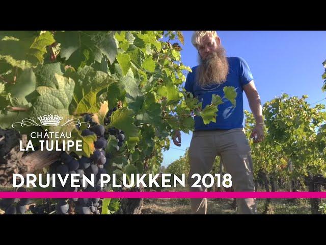 Druivenplukken 2018