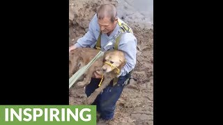 Missing dog found trapped in river bank, get heroic rescue