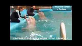 Дельфины самые умные животные!!!